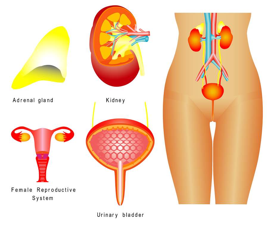 urinary incontinence - women
